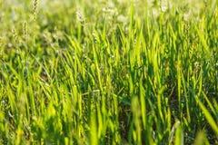 Abstrakcjonistyczna naturalnych tło trawa Zdjęcia Stock