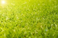 Abstrakcjonistyczna naturalnych tło trawa Zdjęcie Royalty Free