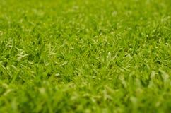 Abstrakcjonistyczna naturalnych tło trawa Fotografia Royalty Free