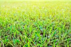 Abstrakcjonistyczna naturalnych tło zielona trawa Obraz Stock
