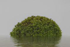 Abstrakcjonistyczna odosobniona wyspa z zieloną roślinnością na wodzie z Obraz Royalty Free