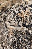 Abstrakcjonistyczna organicznie powierzchnia Drzewko palmowe barkentyna Fotografia Stock