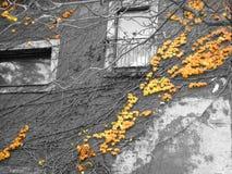 Abstrakcjonistyczna pięcie roślina na szarych ścianach Obraz Royalty Free