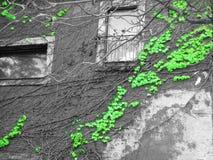 Abstrakcjonistyczna pięcie roślina na szarych ścianach Zdjęcia Stock