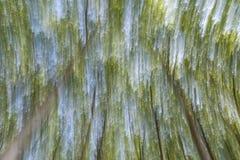 Abstrakcjonistyczna ruch plama drzewa w lesie zdjęcia stock