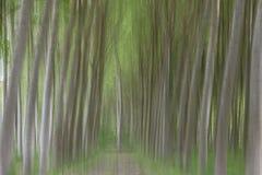 Abstrakcjonistyczna ruch plama drzewa w lesie zdjęcia royalty free