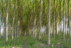 Abstrakcjonistyczna ruch plama drzewa w lesie zdjęcie royalty free