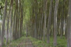 Abstrakcjonistyczna ruch plama drzewa w lesie fotografia royalty free