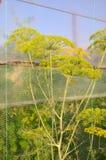 abstrakcjonistyczna składu głębii koperu pola kwiatu płycizna Obrazy Stock