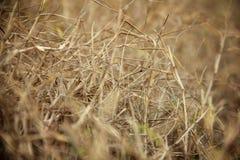 Abstrakcjonistyczna sucha trawa w łące Zdjęcie Stock