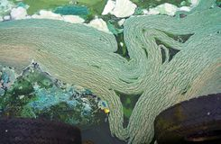 Abstrakcjonistyczna szlam tekstura Zielony tło Trwanie woda Zdjęcia Royalty Free