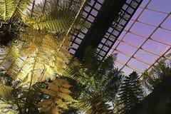 Abstrakcjonistyczna sztuka architektura i natura Fotografia Royalty Free