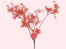 abstrakcjonistyczna sztuka Sakura Obrazy Royalty Free