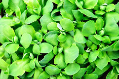 abstrakcjonistyczna tła zieleni liść roślina Obrazy Stock