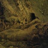 Abstrakcjonistyczna tło tekstura dla mistycznego wizerunku drewno i sieć Zdjęcie Stock