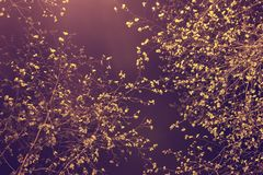 Abstrakcjonistyczna tło tekstura ulistnienie przy nocą iluminującą a Zdjęcie Royalty Free