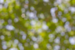 Abstrakcjonistyczna tło zieleń Zdjęcia Royalty Free