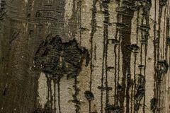 Abstrakcjonistyczna tekstura drzewny bagażnik zdjęcie royalty free