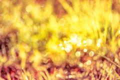 Abstrakcjonistyczna trawa z kroplami na naturalnym zamazanym tle plenerowy Fotografia Stock