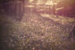 Abstrakcjonistyczna wiosna Obraz Stock