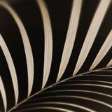 abstrakcjonistyczna zbliżenia liść palma Obrazy Stock