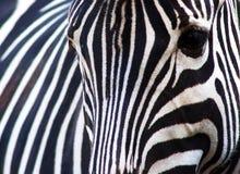abstrakcjonistyczna zebra obrazy stock