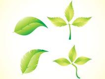 abstrakcjonistyczna zieleń leafs set Obraz Royalty Free