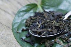 Abstrakcjonistyczna zielona herbata i łyżka wysuszeni zielona herbata liście na liścia tle Fotografia Stock