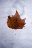 abstrakcjonistyczna zima Zdjęcie Stock