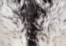 Abstrakcjonistyczna zwierzęca futerkowa tekstura Obrazy Stock