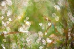 abstrakcjonistyczne backdop tła plamy flory skupiają się natury abstrakcjonistyczny światło słoneczne Zdjęcie Stock