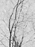 abstrakcjonistyczne gałąź Obraz Royalty Free