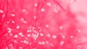 Abstrakcjonistyczne kwiaciaste tło menchie Zdjęcie Stock