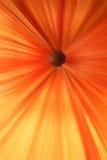 Abstrakcjonistyczne pomarańczowe linie i czarny dziura Obrazy Royalty Free