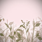 abstrakcjonistyczne rośliny Obraz Royalty Free