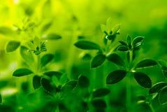 Abstrakcjonistyczne wiosen rośliny Zdjęcie Royalty Free