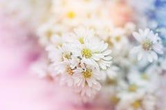 Abstrakcjonistycznego białego żółtego kwiatu Miękka ostrość Zdjęcie Stock