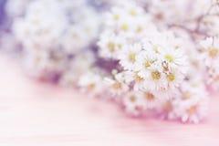 Abstrakcjonistycznego białego żółtego kwiatu Miękka ostrość Zdjęcie Royalty Free