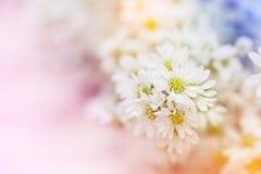 Abstrakcjonistycznego białego żółtego kwiatu Miękka ostrość Obraz Stock