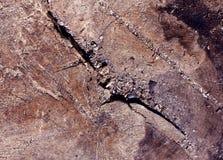Abstrakcjonistycznego drzewa rżnięta tekstura Zdjęcia Stock