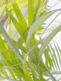 abstrakcjonistycznego kwiat naturalnej konsystencja papierowej Fotografia Royalty Free