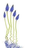 abstrakcjonistycznego kwiatu gronowy hiacynt Zdjęcie Stock