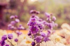 Abstrakcjonistycznego kwiatu tła miękki światło na świetle słonecznym Obrazy Royalty Free
