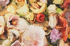 abstrakcjonistycznego kwiatu tła poślubnika Tropikalny kwiat w wodzie Obraz Royalty Free
