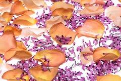 abstrakcjonistycznego projektu tła kolorowy kwiat fractal wywołało płatki deseniowych Obrazy Stock