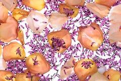 abstrakcjonistycznego projektu tła kolorowy kwiat fractal wywołało płatki deseniowych Obraz Stock