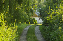 abstrakcjonistycznego ranek naturalna lato tapeta Fotografia Royalty Free