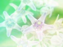 Abstrakcjonistycznego Rozmytego korona kwiatu kolorowy tło Obrazy Royalty Free