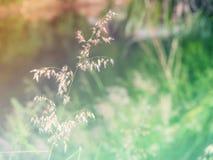 Abstrakcjonistycznego Rozmytego trawa kwiatu kolorowy tło Zdjęcia Royalty Free