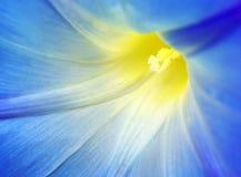 abstrakcjonistycznego tła błękitny kwiatu macro zdjęcie royalty free